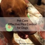 Flea Control for the Family Dog