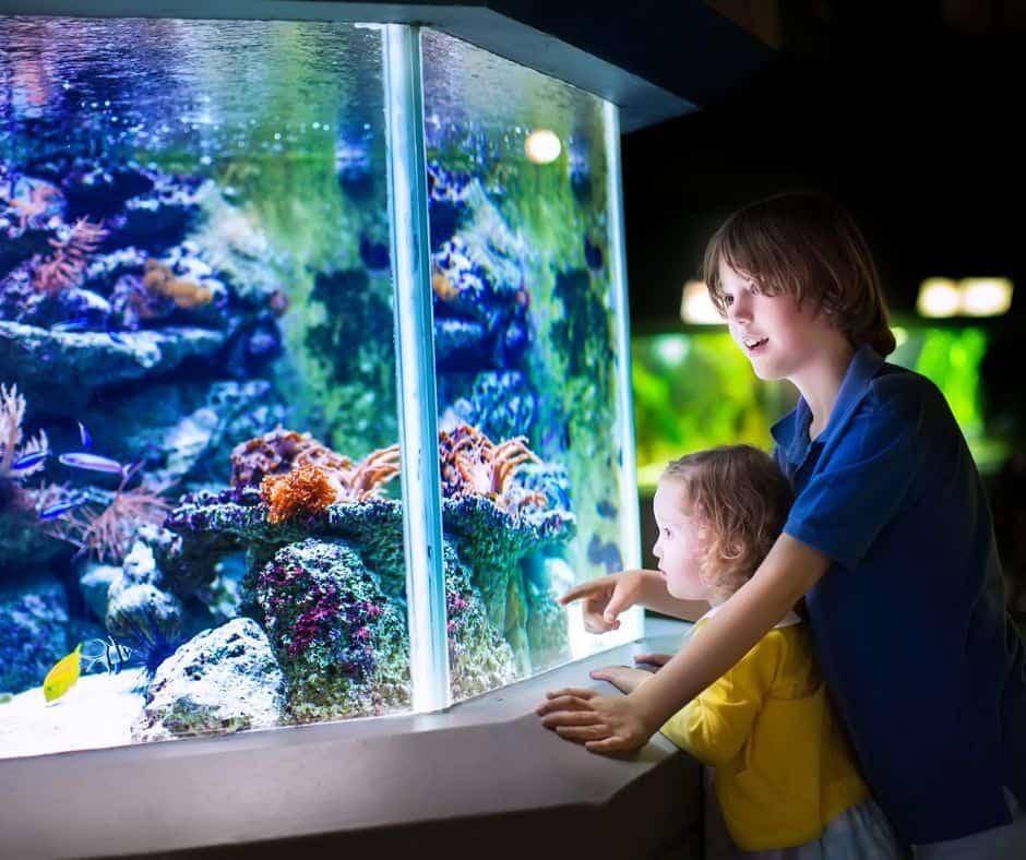 two boys looking at aquarium tank