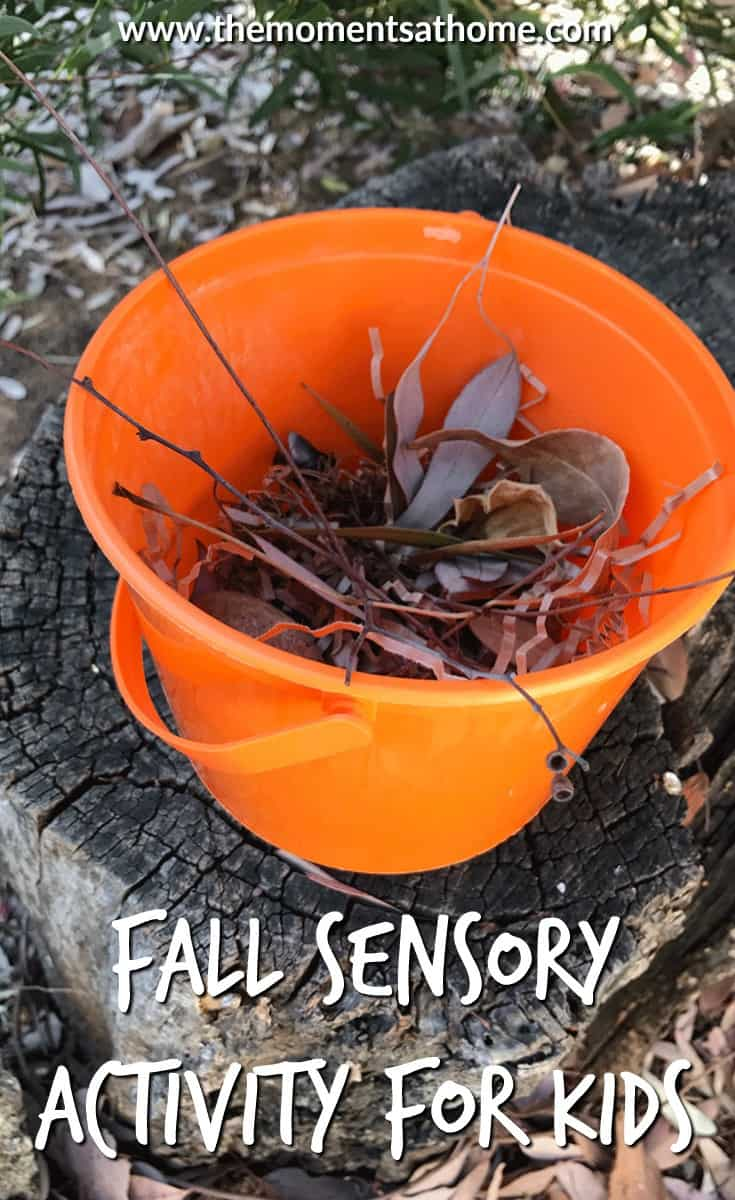 Fall sensory bin for kids. Part of the weekly virtual book club for kids this is a simple fall activity for kids. Find this activity and more based on this week's leaf theme.