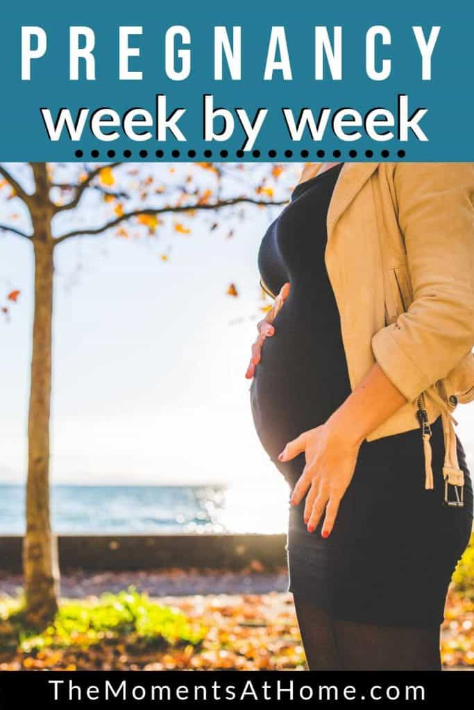 "pregnant woman standing outside at sunset with text ""Your week by week pregnancy guide"" from The Moments At Home"